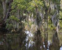 Árvores, musgo espanhol e reflexões Imagem de Stock Royalty Free