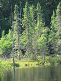Árvores na água Fotografia de Stock Royalty Free