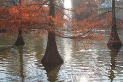 Árvores na água Fotos de Stock Royalty Free