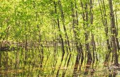 Árvores na água na floresta imagem de stock royalty free