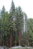 Árvores na atenção foto de stock