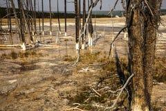 Árvores na bacia de Biscout Foto de Stock Royalty Free