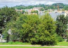 Árvores na cidade Imagens de Stock Royalty Free