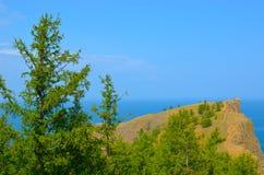 Árvores na costa de Baikal Imagem de Stock