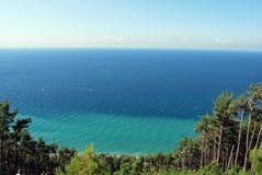 Árvores na costa do Mar Negro Imagens de Stock