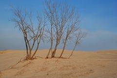 Árvores na duna de areia desolada Foto de Stock Royalty Free