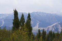 Árvores na estação do outono com fundo das montanhas Fotografia de Stock Royalty Free