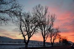 Árvores na estrada em Romênia no alvorecer Fotos de Stock