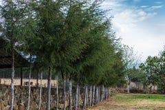 Árvores na exploração agrícola Imagem de Stock Royalty Free