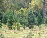 Árvores na fileira Fotografia de Stock
