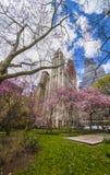 Árvores na flor na cidade Hall Park no Lower Manhattan foto de stock royalty free