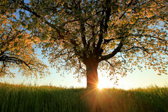 Árvores na flor na primavera Foto de Stock Royalty Free