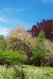 Árvores na flor no parque de Leeds Castle Kent Reino Unido fotos de stock royalty free