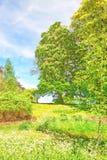 Árvores na flor no parque perto de Leeds Castle Kent Reino Unido foto de stock royalty free