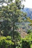 Árvores na floresta úmida fotos de stock royalty free