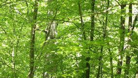 Árvores na floresta video estoque