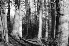 Árvores na floresta Imagem de Stock