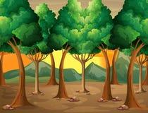 Árvores na floresta ilustração do vetor