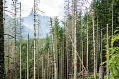 Árvores na floresta Fotos de Stock Royalty Free