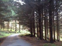 Árvores na floresta Imagens de Stock