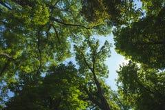 Árvores na floresta fotografia de stock