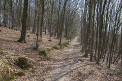 Árvores na floresta com céu azul Fotos de Stock Royalty Free