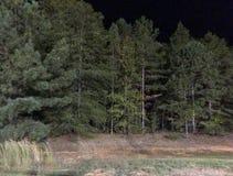 Árvores na floresta contra céus noturnos Fotos de Stock