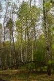 Árvores na floresta crescida em uma árvore quebrada foto de stock royalty free