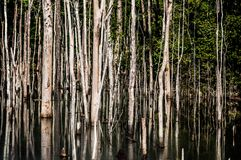 Árvores na floresta das Amazonas imagem de stock