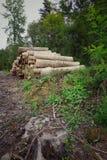 Árvores na floresta na montanha imagem de stock