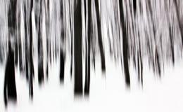 Árvores na floresta que agita a câmera Imagens de Stock