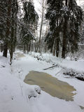 Árvores na floresta sob o inverno da neve Fundo bonito natural com as árvores geadas no inverno Imagem de Stock