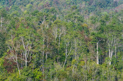 Árvores na floresta tropical na estação do inverno Imagem de Stock