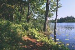 árvores na floresta verde com musgo e cores do outono - retr do vintage Fotos de Stock