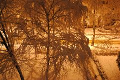 Árvores na frente de uma construção Fotos de Stock