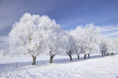 Árvores na geada Imagens de Stock