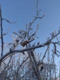 Árvores na geada fotos de stock