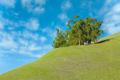 Árvores na grama verde com céu azul Imagens de Stock