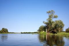Árvores na ilha pequena no rio Fotografia de Stock Royalty Free
