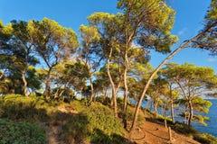 Árvores na inclinação da montanha contra o céu azul imagens de stock royalty free
