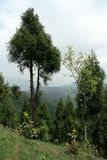 Árvores na inclinação de montanha Fotografia de Stock Royalty Free