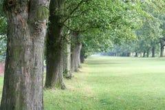 Árvores na linha Foto de Stock