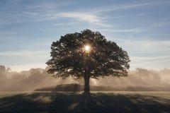 Árvores na luz da manhã Fotografia de Stock