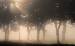 Árvores na luz da manhã Fotos de Stock Royalty Free