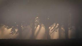 Árvores na luz da manhã Imagens de Stock Royalty Free
