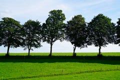 Árvores na luz do sol Imagem de Stock Royalty Free
