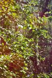 Árvores na luz solar Imagens de Stock Royalty Free