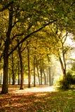 Árvores na luz solar Fotos de Stock Royalty Free