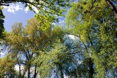 Árvores na mola Imagens de Stock