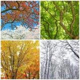 Árvores na mola, no verão, no outono e no inverno Foto de Stock Royalty Free